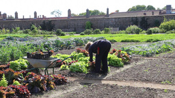 The Kitchen Garden Hampton Court Palace UK Footage