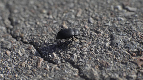 Lonely Beetle On The Road Footage