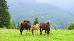 Horses grazing in a meadow Archivo