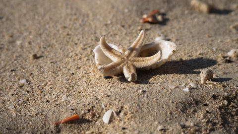 Alive starfish on a shore Live Action