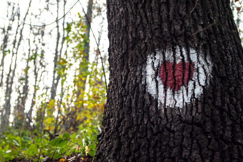Red Heart painted on a tree white background. Signal for hikers and mountaineers フォト