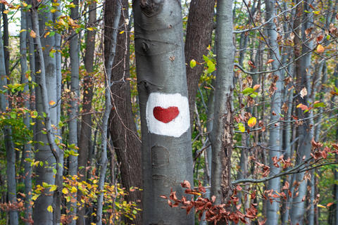 Red Heart painted on a tree bark. Signal for mountaineers and hikers 01 フォト