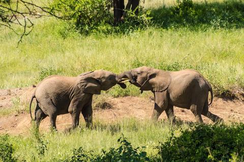 Deux elephants Photo
