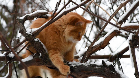 big red cat sitting on a branch on a winter day ビデオ