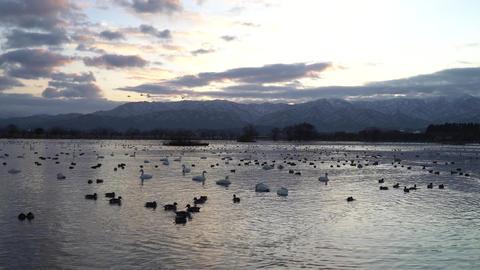 日の出と白鳥 ビデオ