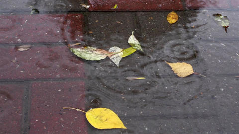 Leaves in the rain Footage