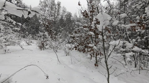 Light snow in winter forest GIF