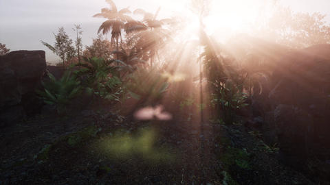 Incredible tropical green forest view with sun flare in morning Live Action