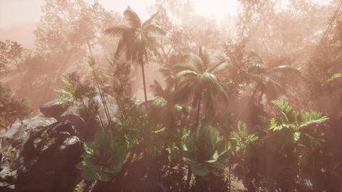 Sunlight shining in tropical jungle Stock Video Footage
