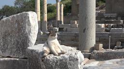 Turkey Ephesus Ephesos Efes sunbathing cat in ancient antique Greek ruin Footage