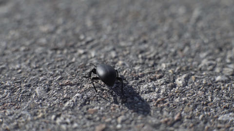 Black Beetle On The Asphalt Footage