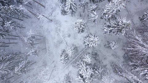 Flight over snowstorm in a snowy mountain coniferous forest, foggy unfriendly ビデオ