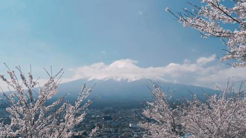 Japanese sakura tree with Mount Fuji Footage
