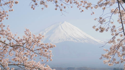 Fujisan view with sakura cherry blossom Footage