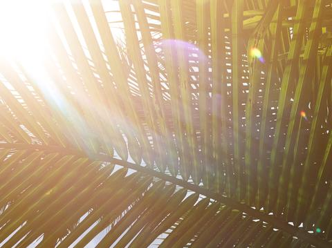 beautiful light from lens flare shines on green coconut-palm leaf stalk フォト