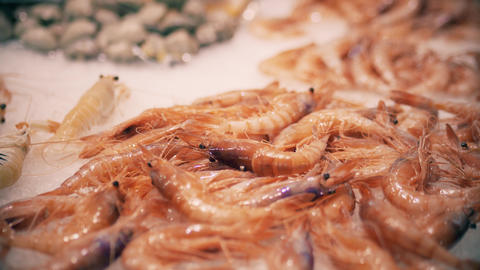Shrimps on ice. Seafood market stall Live Action