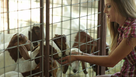 Pretty Girls With Cute Young Nubian Goats stock footage