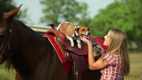 Jack-Rat Terrier Dog on Horse's Saddle Footage