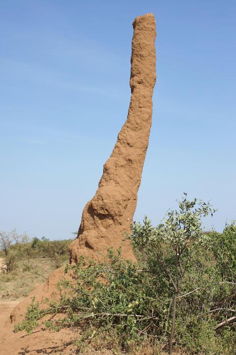 Termite nest, Ethiopia, Africa フォト
