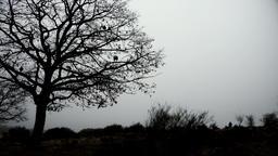 Ravens sitting on the tree GIF