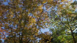 Autumn Trees Through Moving Vehicle on Sunny Day Footage