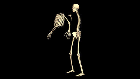 Time-lapse 3d animation showing a process of assembled of the skeleton. Skeleton Animation