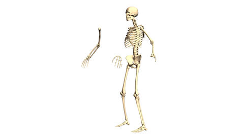 Animated 3D anatomy. Skeleton 3D animation. Time-lapse 3D animation Animation