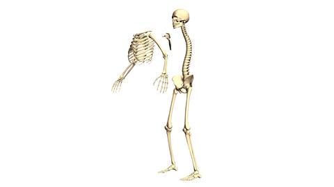 Animated 3D anatomy. Skeleton 3D animation. Time-lapse 3D…, Stock Animation