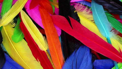 Colorful rainbow bir feathers seamless looping background closeup video 영상물