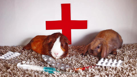 Animal pet vet veterinary doctor concept. Animals pets vaccination heal healing Live Action