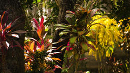 tropical vegetation in indonesia Footage