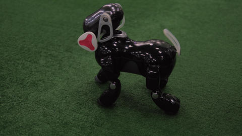 Programmed toy dog-robot. Interactive intelligent pet Footage