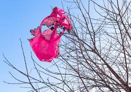 Fallen flying lantern Fotografía