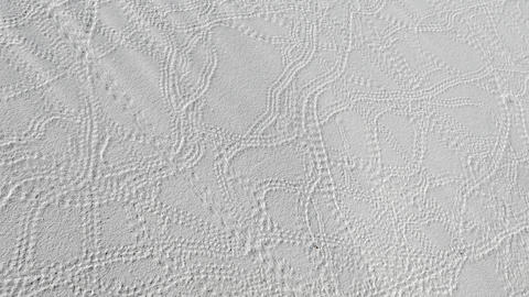 Animal Tracks On Sand Dune At White Sands National Monument Footage
