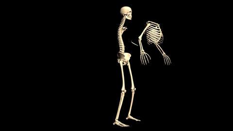 Animated Skeleton Rotating on Black background and…, Stock Animation