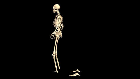 Animated Skeleton Rotating on Black background and... Stock Video Footage