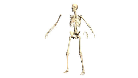 Animated Skeleton Static on Black background and Rotating... Stock Video Footage