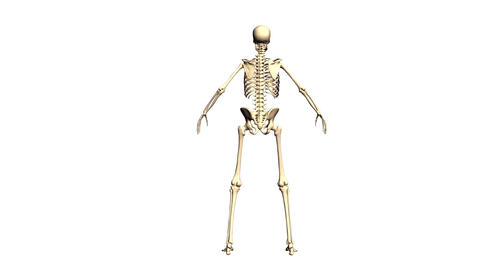 Animated Skeleton Static on Black background and Rotating on White background Animation