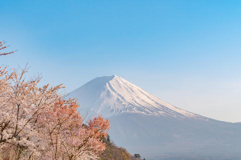 Mt. Fuji japan in spring season and pink cherry blossom tree Photo