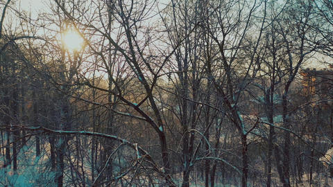 Aerial view of trees in snowy park against shining sun Footage