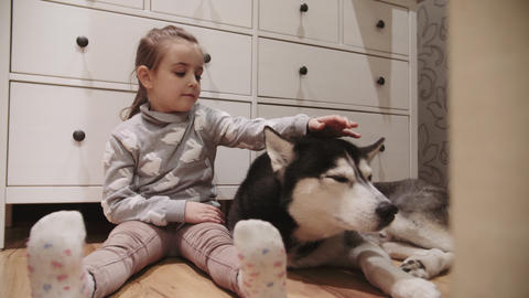 little girl and her black and white siberian husky dog with blue eyes. Girl Live Action