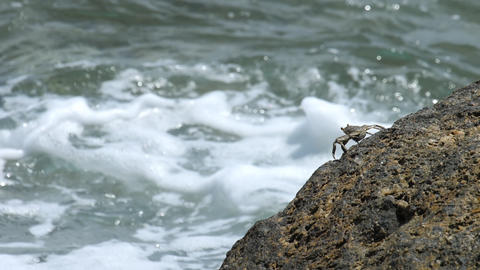 Crab on the rock at the beach Footage