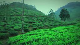 forest Thekkady India 360 Footage