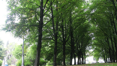 Alley of old lime trees to small provincial town Footage