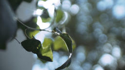 Green Plant Leaves Gently Swaying in Soft Focus Live Action