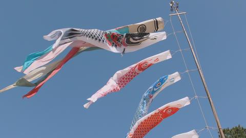 Koinobori,Japanease Carp streamer,at Showa Memorial Park,Japan,Filmed in 4K ビデオ