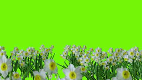 Animation of several animated spring flower scenes on green backgrounds Animation