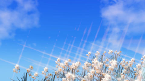 Easter blessing card- with daffodils, blue sky and moving clouds Animation