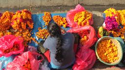 Lady makes flower necklaces on Durbar square,Kathmandu,Nepal Footage