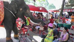 Elephant collecting money after show ,Ayuthaya,Thailand Footage